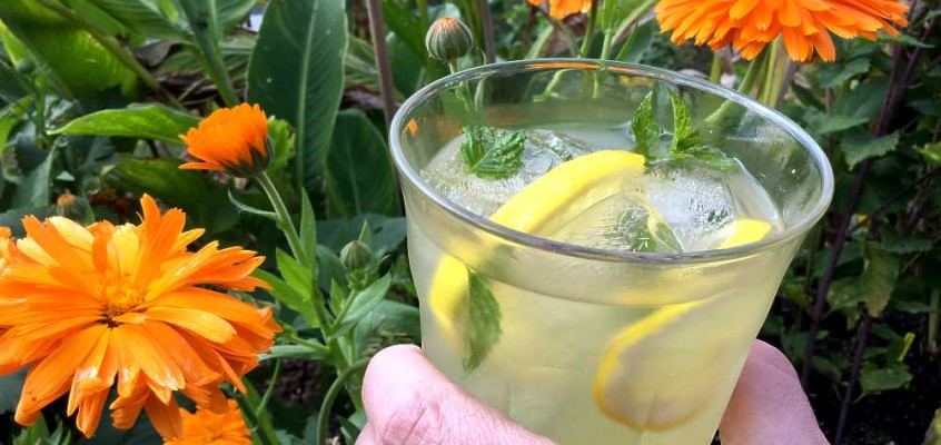 Libanesisk limonade: Avhengighetsdannende sitronsaft