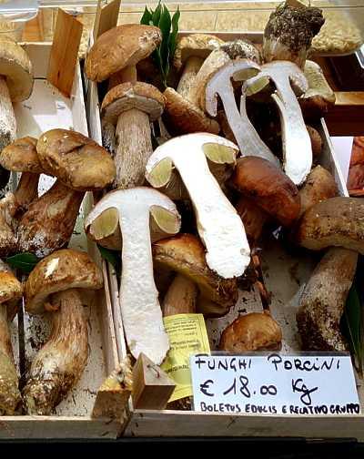 Genoa_funghi_porcini