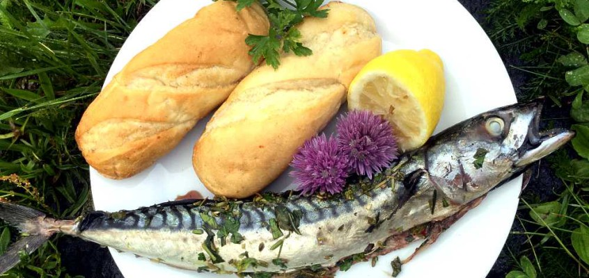 Steckerlfisch: Urtemarinert makrell på grillspyd